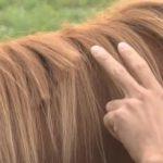田中和世のFacebook顔画像!競走馬のたてがみ切りネット販売か・北海道日高町